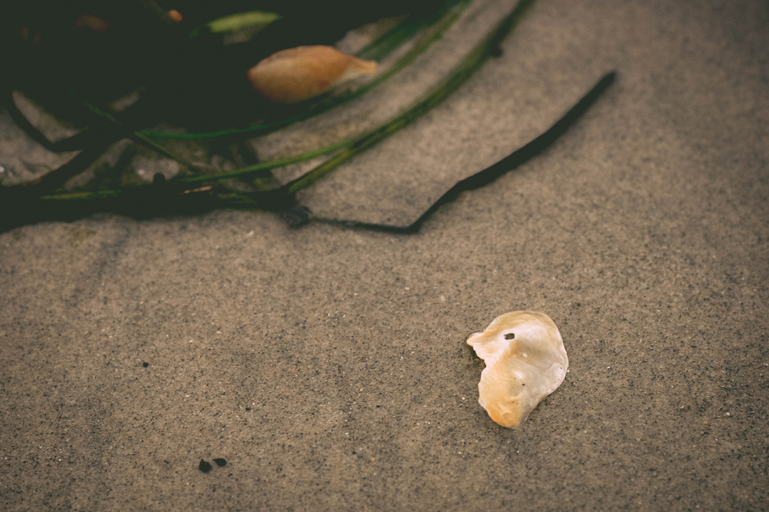 Shell in sand detail